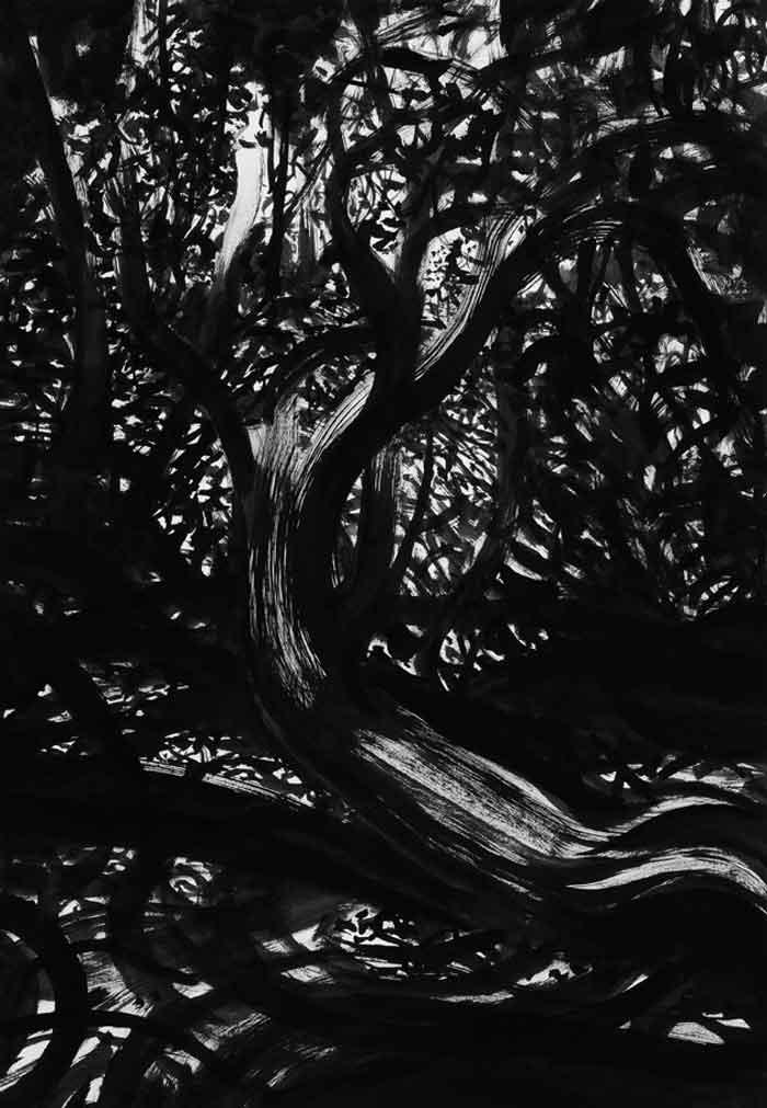 Foreste 3